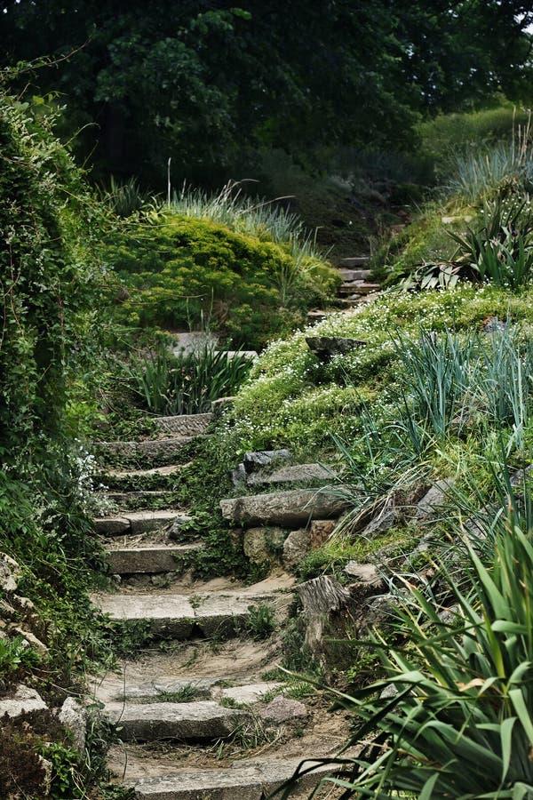 Un mystère moitié-a ruiné les étapes en pierre dans le bosquet de forêt photos libres de droits