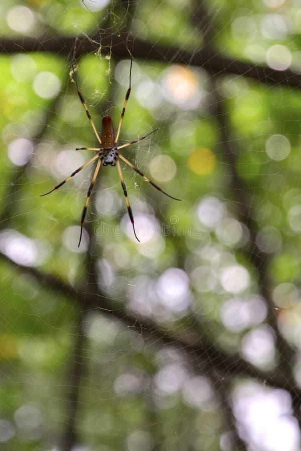 Un negro y una araña amarilla del color foto de archivo libre de regalías