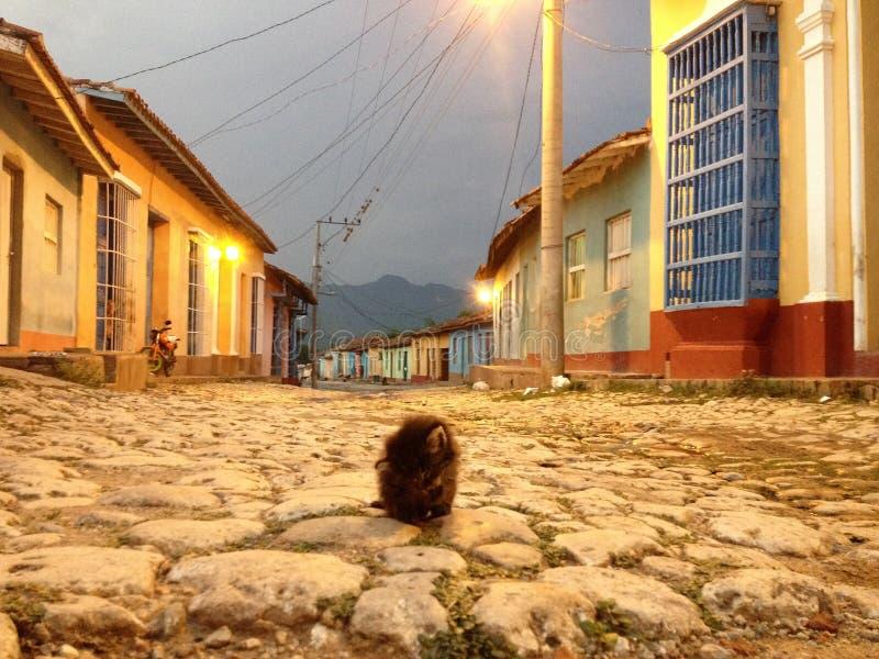 Un nettoyage de chaton lui-même sur une rue pavée en cailloutis dans le site de patrimoine mondial de l'UNESCO du Trinidad, Cuba image stock