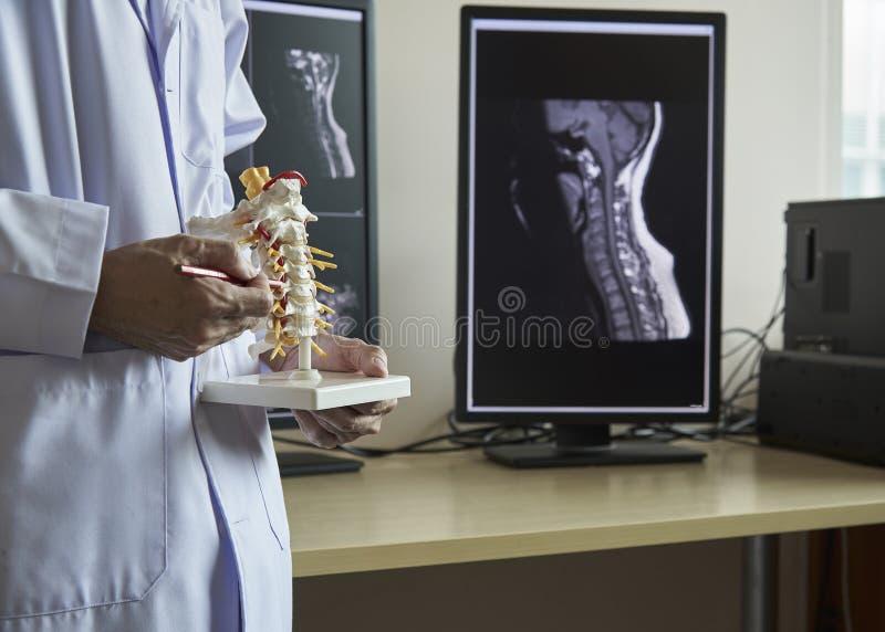 Un neurochirurgo che indica al modello cervicale della spina dorsale fotografia stock