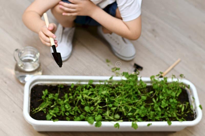 Un niño con una espátula cuida para los verdes en potes imagenes de archivo