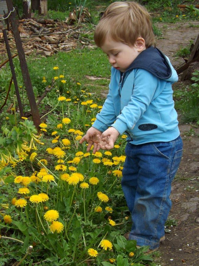 Un niño examina una abeja en una flor foto de archivo libre de regalías