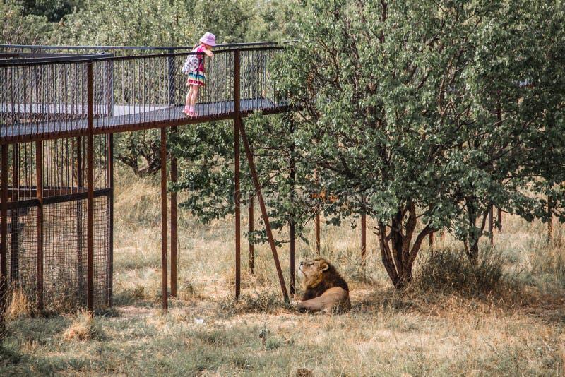 Un niño que juega con un león fotos de archivo