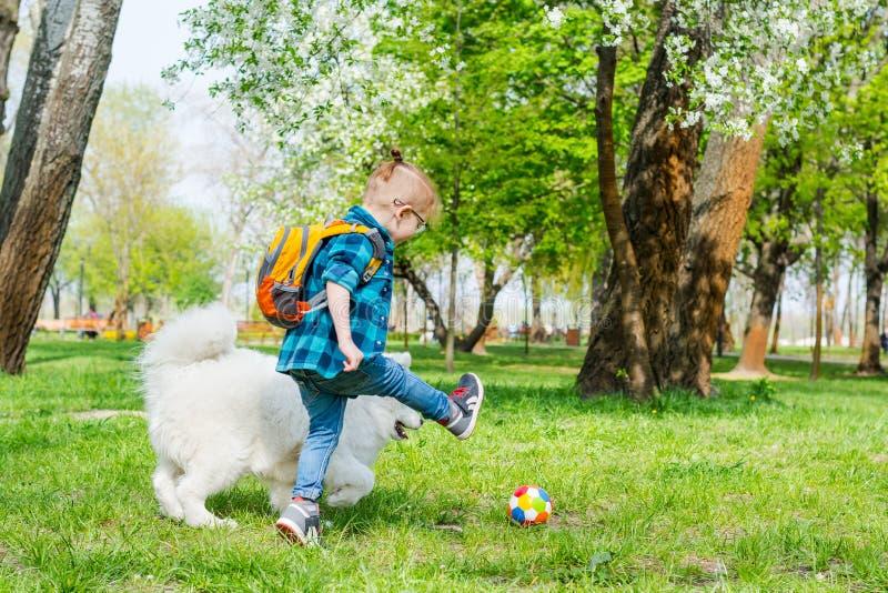 Un ni?o peque?o con los vidrios juega una bola con un perro blanco cerca de ?rboles de florecimiento en primavera fotos de archivo