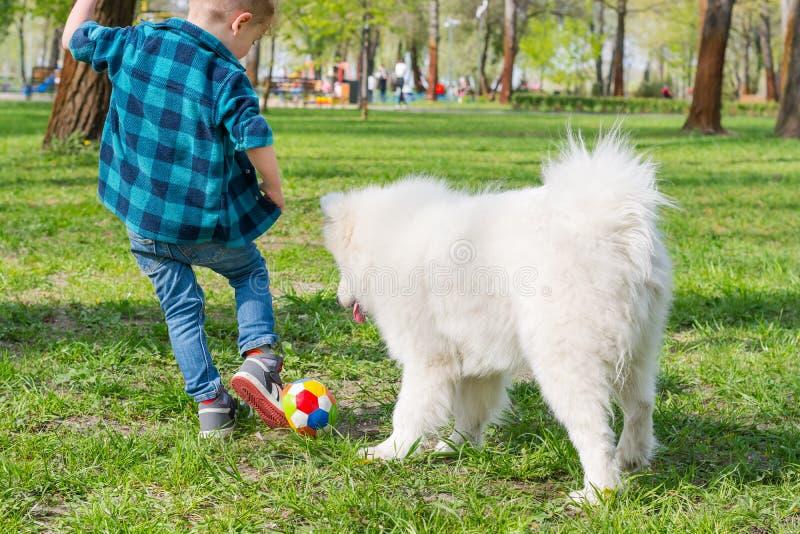 Un ni?o peque?o con los vidrios juega una bola con un perro blanco imagen de archivo