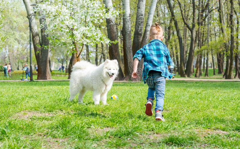 Un ni?o peque?o con los vidrios juega una bola con un perro blanco Un perro del samoyedo y un peque?o funcionamiento del inconfor fotos de archivo libres de regalías