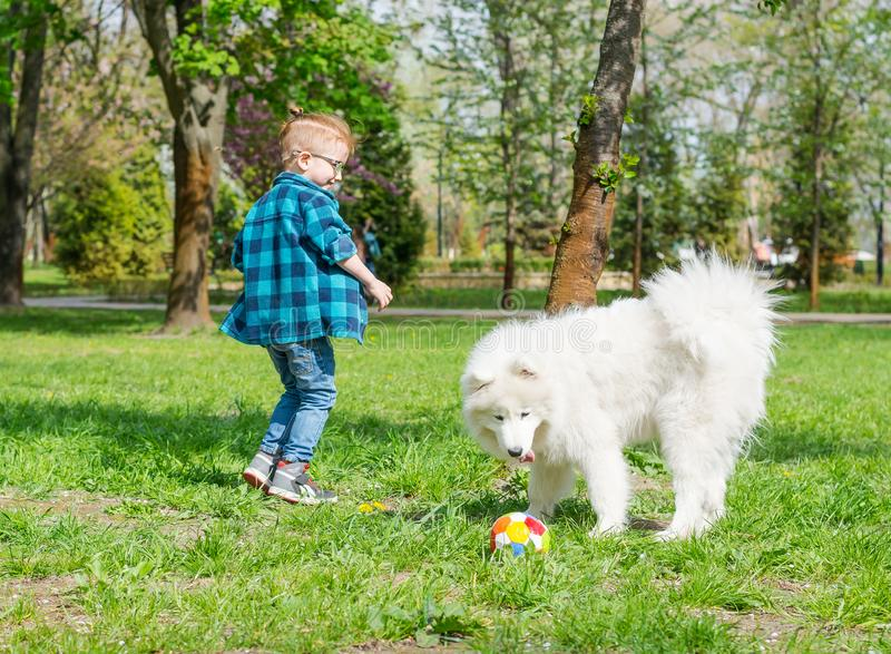 Un ni?o peque?o con los vidrios juega una bola con un perro blanco Un perro del samoyedo y un pequeño fútbol del juego del inconf fotografía de archivo libre de regalías