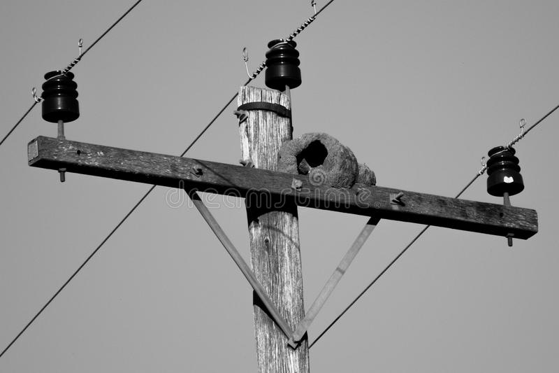 Un nid d'oiseau photographie stock