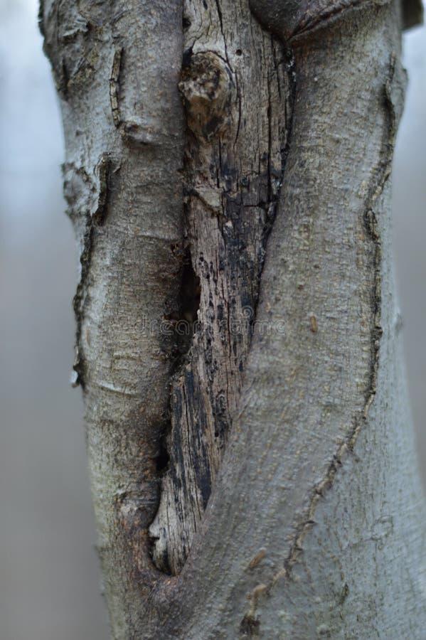 Un nodo torto di un albero immagini stock libere da diritti
