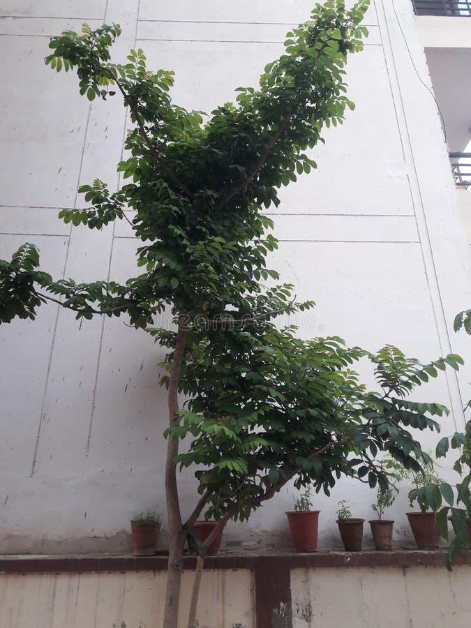 Un nom de plante verte regardant si beau leurs feuilles sont très doux photos libres de droits