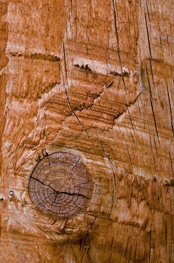 Un nudo en un pedazo de madera fotos de archivo libres de regalías