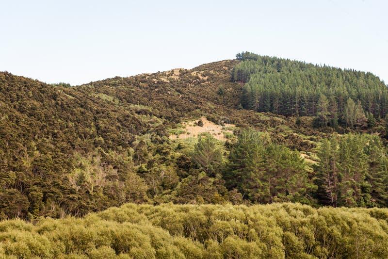 Un nuovo paesaggio caldo di Zeland immagini stock