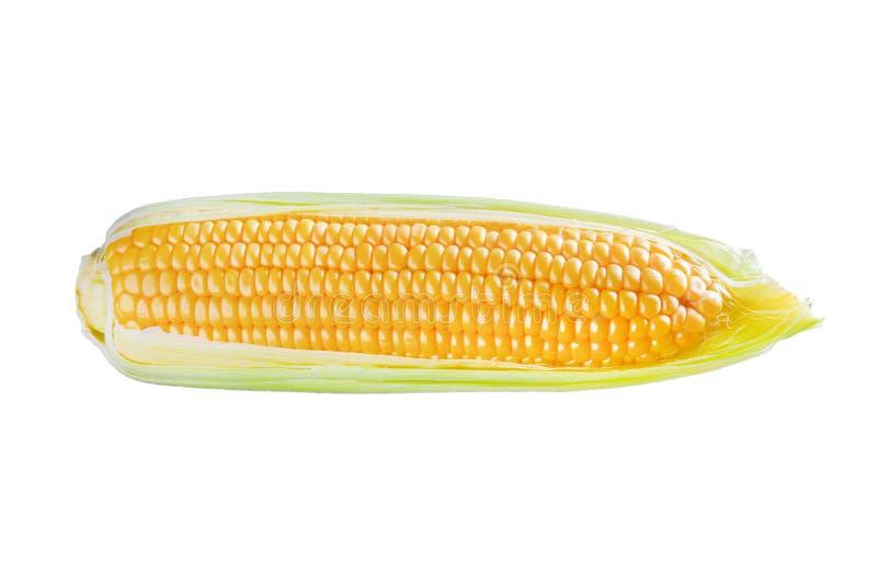 Un oído de maíz aislado en el fondo blanco fotografía de archivo libre de regalías