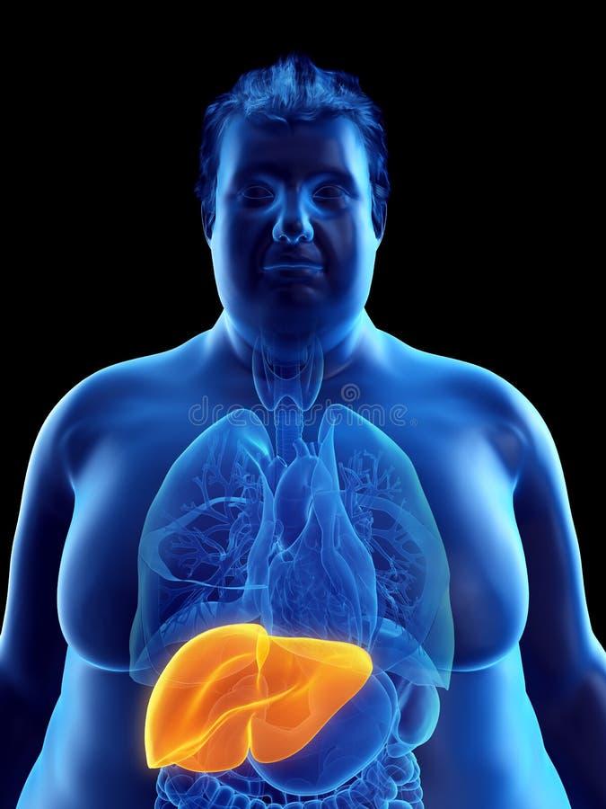 un obeso sirve el hígado ilustración del vector