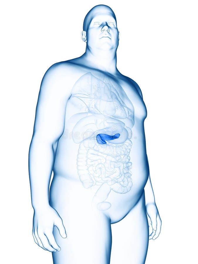 Un obeso sirve el páncreas ilustración del vector