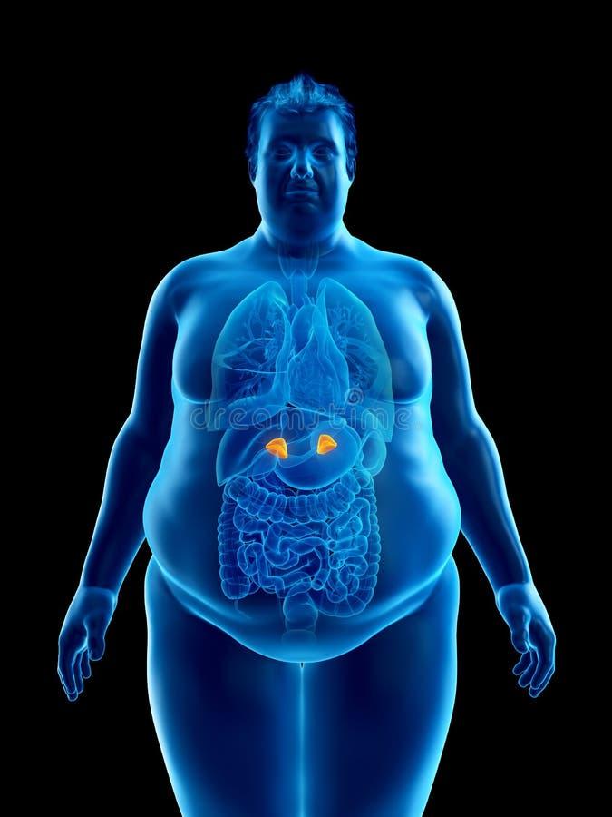 Un obeso sirve las glándulas suprarrenales libre illustration