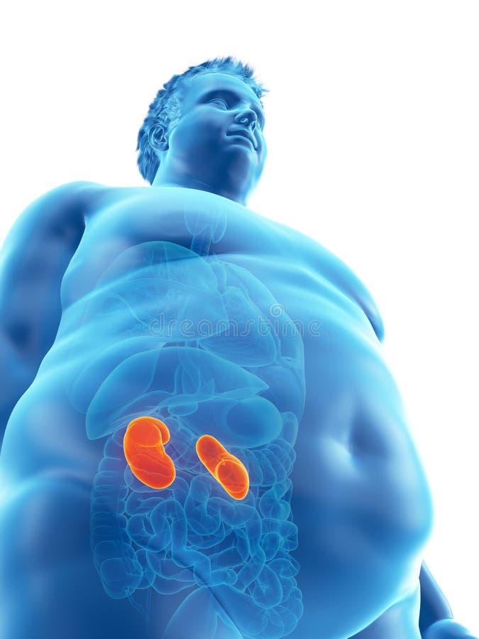 un obeso sirve los riñones ilustración del vector