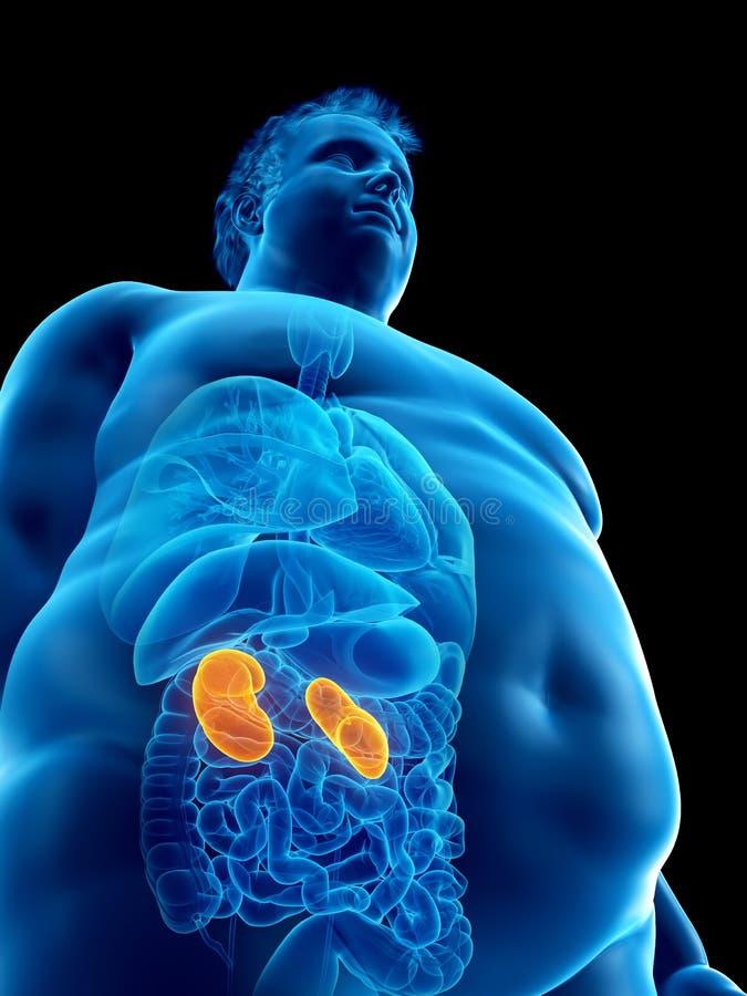 un obeso sirve los riñones stock de ilustración
