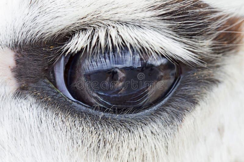 Un occhio della lama, fine su immagine stock libera da diritti