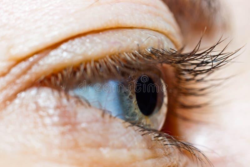 Un occhio grigio del ` s della donna era modalità macro contenuta fotografia stock libera da diritti