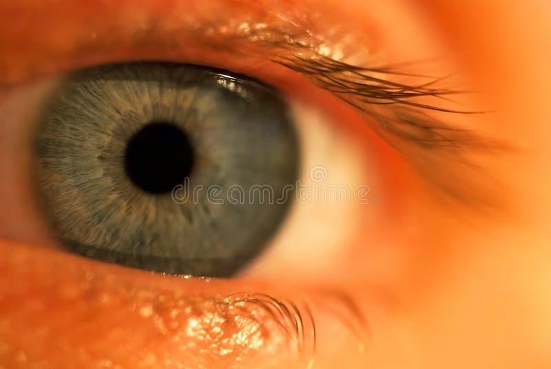 Un oeil bleu photos libres de droits