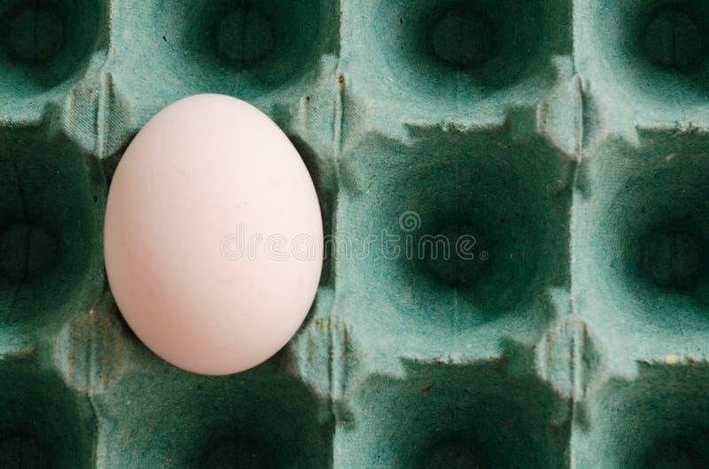 Un oeuf blanc simple disposé dans un carton vert d'oeufs photo libre de droits