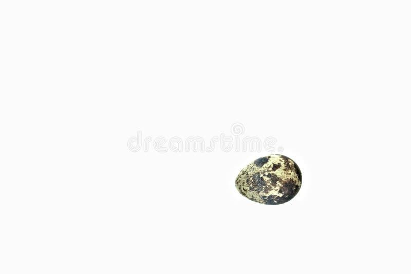 Un oeuf de caille simple sur un tout le fond blanc photographie stock