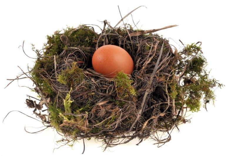 Un oeuf de poulet dans le nid d'un oiseau photos libres de droits