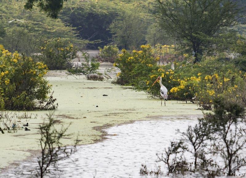 Un oiseau à long bec est vu en parc de zoologie photographie stock