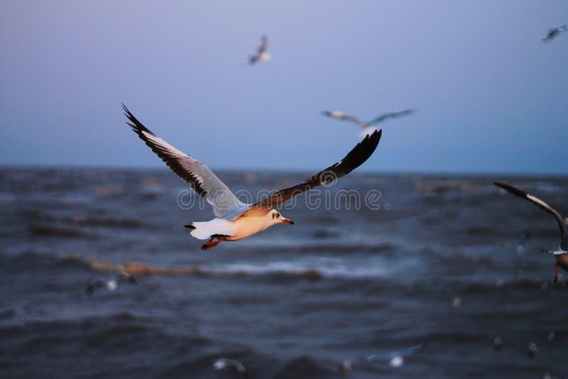 Un oiseau photos libres de droits