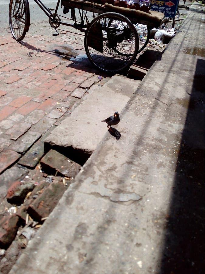 Un oiseau photo libre de droits