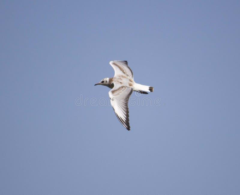 Un oiseau dans le ciel image stock