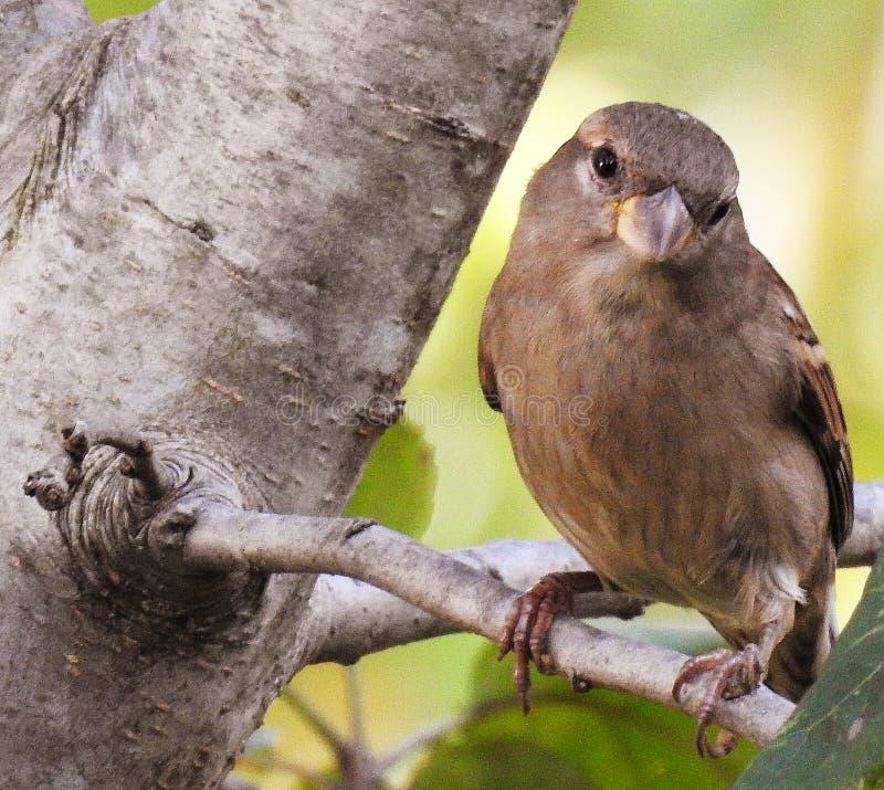 Un oiseau me regardant sur un membre d'arbre images stock