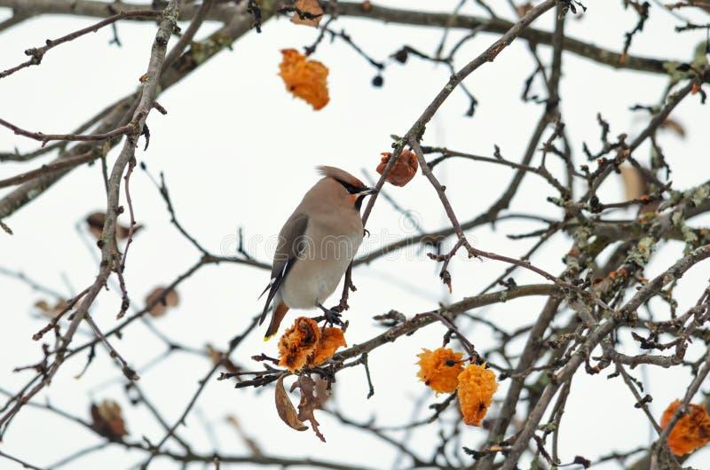 Un oiseau migrateur photos libres de droits