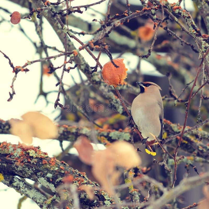 Un oiseau migrateur photographie stock