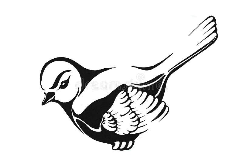 Un oiseau noir et blanc photo stock