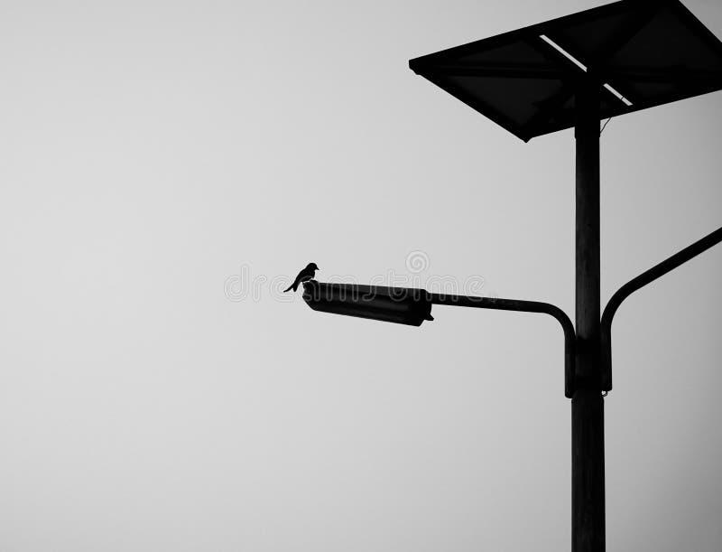 Un oiseau se tenant sur la lumière de route photos libres de droits