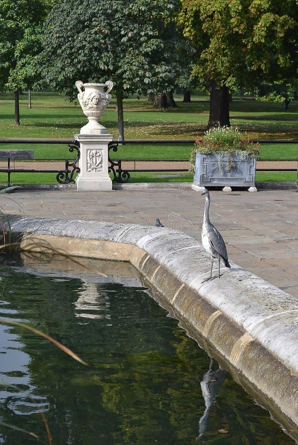 Un oiseau solitaire se tient au bord de l'étang Londres, grand Britai photos libres de droits