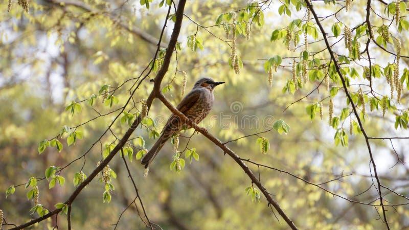 Un oiseau sur la branche de l'arbre en Corée du Sud images libres de droits