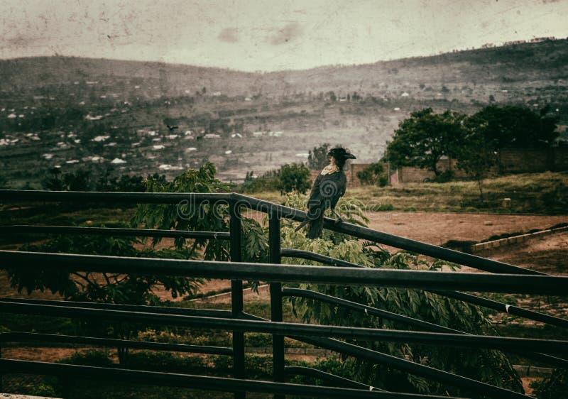Un oiseau sur une balustrade en Afrique photos libres de droits