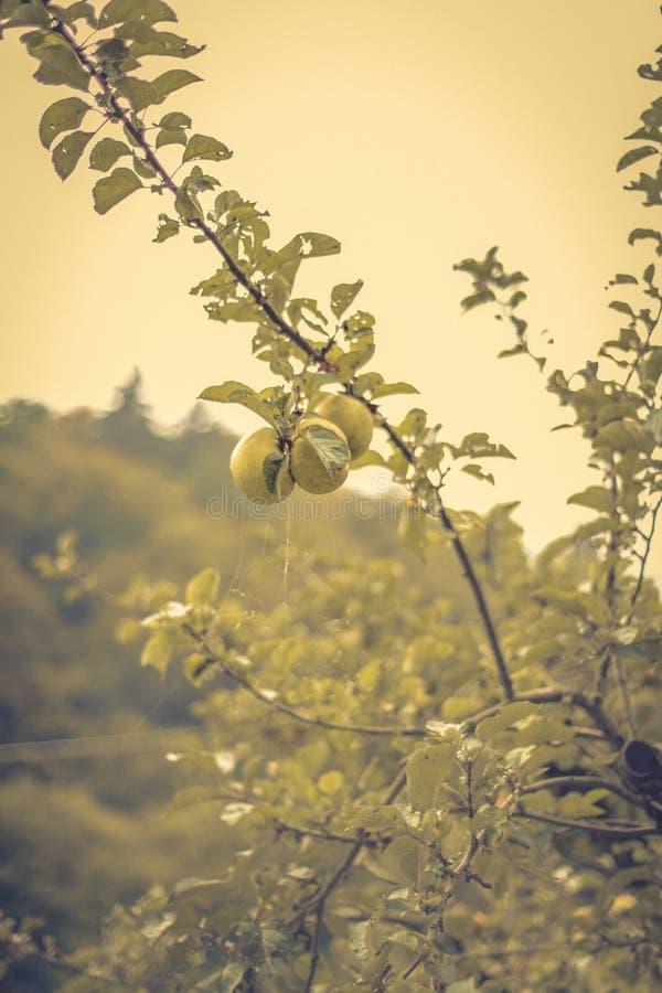 Un'orchidea Trentino - in Italia immagini stock libere da diritti
