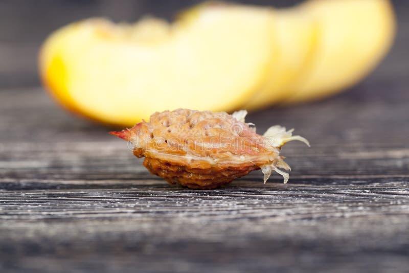 un os de pêche mûre photographie stock
