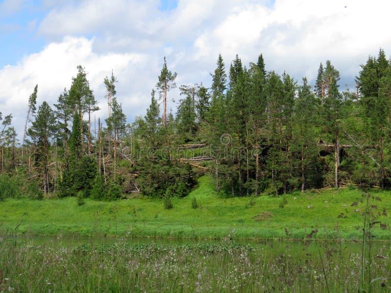 Un ouragan puissant avec la racine a retiré des arbres et des arbustes photographie stock
