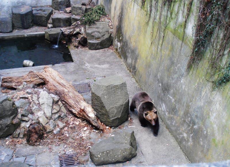Un ours au château dans le ½ Krumlov d'ÄŒeskà image stock