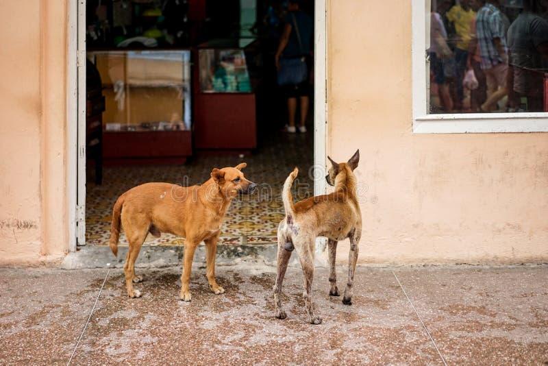 Un outfront di due cani della via un negozio immagini stock libere da diritti