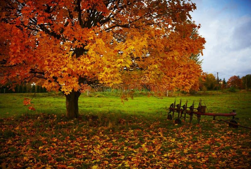 Un outil agricole à côté d'un arbre d'automne photographie stock