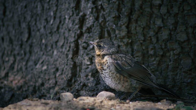 un pájaro cerca del árbol foto de archivo libre de regalías