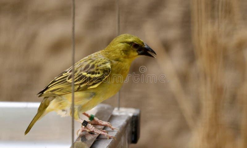 un pájaro del observador imagen de archivo libre de regalías