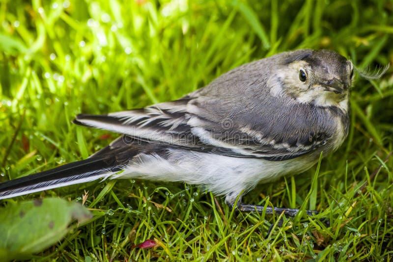 Un pájaro del trago foto de archivo