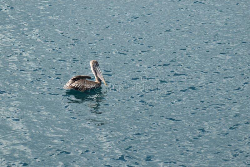 Un pájaro en el agua fotos de archivo